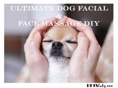 Pamper Your Pooch With A DIY Spa Day: How To Give A Doggy Facial ... see more at PetsLady.com ... The FUN site for Animal Lovers