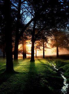 Mist, Richmond Park, London, England