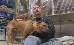 Update: Pit Bull Used For Dogfighting Just Wants To Be Held By Man Who Saved Him