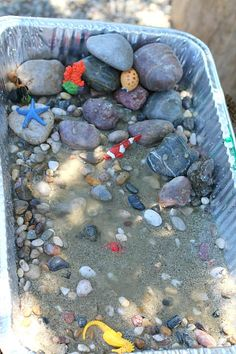 Add water to your tide pool to create high tide