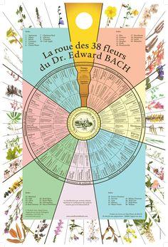 La roue des 38 Fleurs du docteur Edward Bach