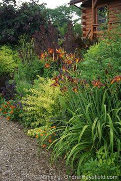 'Milk Chocolate' and 'Nona's Garnet' daylilies (Hemerocallis), 'Mellow Yellow' spirea (Spiraea thunbergii 'Ogon'), 'Profusion Orange' zinnia, 'Royal Purple' smokebush (Cotinus coggygria), and 'Red Majestic' contorted hazel (Corylus avellana) Back Gardens, Outdoor Gardens, Vegetable Garden Design, Outdoor Landscaping, Landscaping Ideas, Garden Borders, Mellow Yellow, Dream Garden, Land Scape