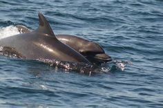 Dophins we seen on our tour