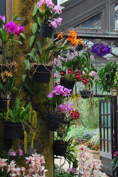 Wife, Mother, Gardener: Plants from Longwood Garden's Conservatory