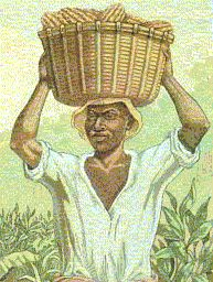man with basket in cameroon