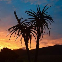 "JustFor2Wilderness op Instagram: ""sunset in Wilderness #holidayaccommodation #gardenroute #honeymoon #romanticstay…"" Wilderness South Africa, Holiday Accommodation, Romantic Getaway, National Parks, Ocean, Sunset, Beach, Places, Garden"