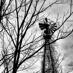 Strength of Time by Heather King Heather King, Black And White Photography, My Images, Fine Art America, Nature Photography, Strength, Wall Art, Prints, Ontario