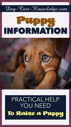 if you need love get a puppy View homework help - if you need love get a puppy case from bus a424 at indiana university, bloomington lewis hostetler if you need love, get a puppy 1 professional.