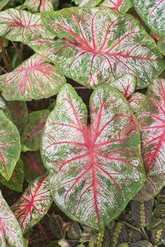 26 Best Garden Images Toxic Plants For Cats Plants Poisonous Plants
