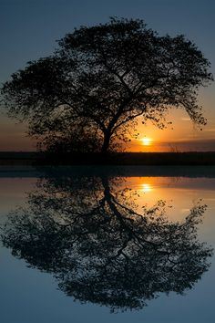 Symmetry... awesome. #nature #reflections #sunset #tree