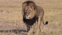 Lion Killed Cecil