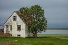 Iceland when the countryside allows a tree to sleep and rest!