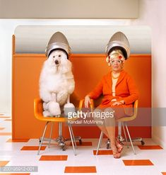 Poodle and senior woman sitting under hair dryers