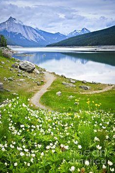 Mountain Lake In Jasper National Park Artist: Elena Elisseeva