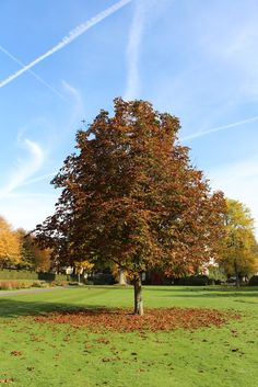 Autumn colours at West Dean Gardens, West Sussex. Get your Autumn pass for £17 for  weeks entry to the Gardens.