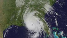 Sateliittikuva hurrikaani Michaelin etenemisestä. Panama City, Florida, Pets, Painting, Animals, Animales, Animaux, The Florida, Painting Art