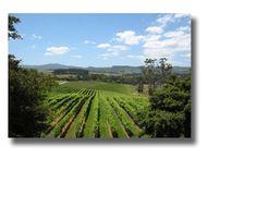Matakana Coast Wine Country - Official visitor information site for Auckland's Matakana Coast Wine Country region.