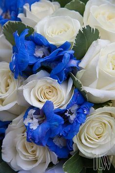 """white roses with a hint of blue-- maybe a little to """"cool"""" in its coloring. Maybe orange roses instead?"""