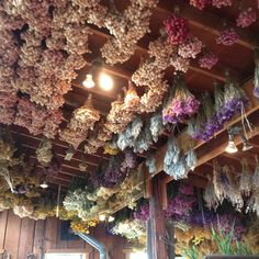 Hurds. Awesome ceiling decor.