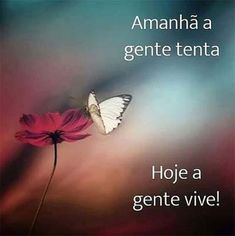 MotiManha1 Motivational Phrases, Inspirational Quotes, Portuguese Quotes, Carpe Diem, Good Vibes, Beautiful Words, Messages, Thoughts, Humor