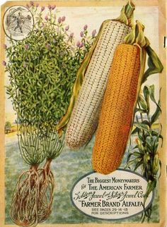 """Lifelike renderings of Golden Jewel and Silver Jewel corn and Farmer Brand Alfalfa  promised that these varieties were """"the biggest moneymakers for the American farmer.""""  Farmer Seed & Nursery originated in Faribault, MN in 1888. Andersen Horticultural Library hosts a collection of vintage Farmer Seed & Nursery catalogs."""