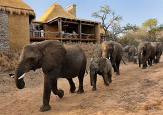 Camp Jabulani Safari Lodge Hotel close to Kruger National Park Game Reserve Big 5 Luxury Suites honeymoon, families, trips and tours African Animals, African Safari, Kruger National Park, National Parks, Thunder And Lightning Storm, Private Games, Adventure Activities, Game Reserve, Hotels And Resorts