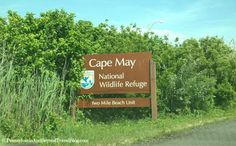 Visiting the Cape May National Wildlife Refuge - Wildwood and Cape May New Jersey. LOVE this place and it's FREE!
