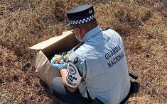 Los oficiales narraron que el hecho se registró sobre la carretera Pinoteca Nacional-Salina Cruz, en una caja de cartón llevaban los huevos de tortuga Este día se dio a conocer que elementos de la Guardia Nacional Mexicana, recataron mil 250 huevos de tortuga, los cuales habían sustraídos de manera ilegal de sus nidos en la […] La entrada Guardia Nacional logra rescatar más de mil huevos de tortuga en Oaxaca se publicó primero en . Sea Turtles, Oaxaca, Eggs, Snare Drum, Nests, High Road