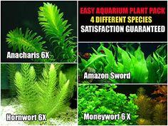 15 + stems / 4 species Live Aquarium Plants Package - Anacharis, Amazon , Hornwort and Moneywort - (10-50 Gallon Aquariums) - http://www.petsupplyliquidators.com/15-stems-4-species-live-aquarium-plants-package-anacharis-amazon-hornwort-and-moneywort-10-50-gallon-aquariums/