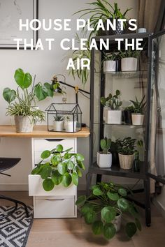 Easy care indoor plants that look amazing. Get your houseplant decor on with these houseplant care tips for 29 of the best indoor plants for beginners. Easy Care Indoor Plants, Best Indoor Plants, Indoor Garden, House Plants Decor, Plant Decor, Suculentas Interior, Winter Floral Arrangements, House Plant Care, Spider Plants
