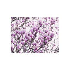 Leinwandbild Magnolien-Traum