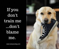 Submissive dog obedience training Like us Online Dog Training, Dog Training Tips, Submissive, Dog Separation Anxiety, Dog Minding, Easiest Dogs To Train, Dog Training Techniques, Dog Care, Dog Stuff