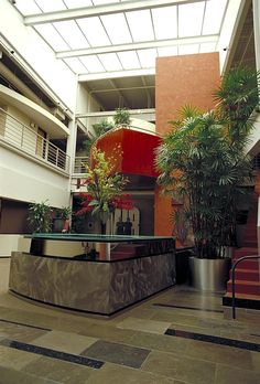 Large Specimen Rhapis Palm in Two-Story Lobby
