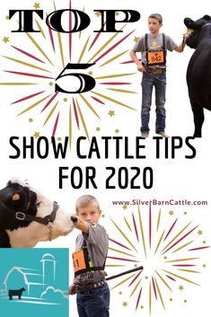 Kick off the year the right way with these five show cattle tips!  Golden nuggets of show steer and heifer advice that we've collected over the last year!