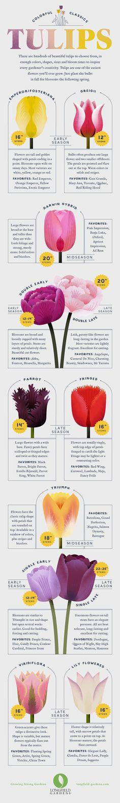 Impressive Bonsai Gifts Plant Red Tassels Tulip Bulbs Perennial Unique Landscape