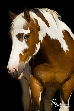 Horse - lovely picture