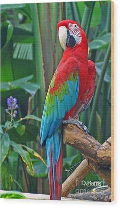 Cute Birds, Pretty Birds, Beautiful Birds, Animals Beautiful, Tropical Birds, Exotic Birds, Colorful Birds, Colorful Parrots, Parrot Pet