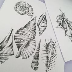 #miriamfrank #tattoo #shells #inspiredbyhaeckel