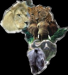 Hunt the big five: lion, cheetah, elephant,cape buffalo, and rhino. African Animals, African Safari, African Art, African Women, Africa Fashion, Afrika Tattoos, Out Of Africa, Tier Fotos, Wildlife Art