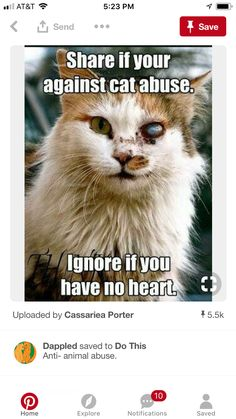 DO NOT ABUSE CATS!!!   OR ANY OTHER ANIMALS!!!  *serious Joey Tribbiani face with finger point*