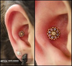 """saintsabrinas:  So much razzle dazzle!   Dan ( dansteinbacher ) did this conch piecing using a 14kt yellow gold """"Rosette"""" from our beloved friends at Body Vision Los Angeles."""