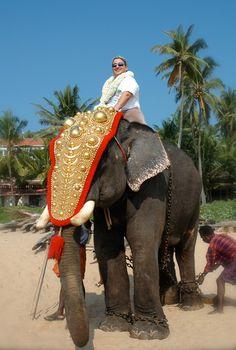 Elephant experience.