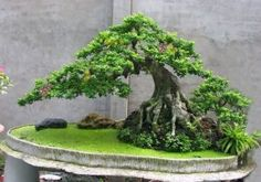 Bonsai Tree Ideas A Guide To Bonsai Trees For Beginners Bonsai Tree Ideas. The art form of bonsai can be a wonderful and unique hobby. Viewing and taking good care of a bonsai collection can be a r… Plantas Bonsai, Bonsai Forest, Bonsai Garden, Forest Garden, Garden Terrarium, Succulents Garden, Ikebana, Bonsai Acer, Bonsai Tree Care