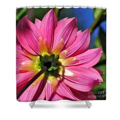 Textures and Beauty of Pink Dahlia Petals Shower Curtain