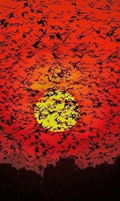 Bat Blizzard