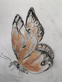Moth, Insects, Animals, Artists, To Draw, Animales, Animaux, Animal, Bugs