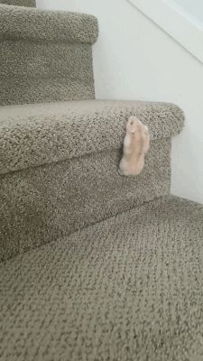 Theodore, the hamster, climbs up the stairs - Niedliche tiere - # - Animals - tierbabys Baby Animals Super Cute, Cute Little Animals, Cute Funny Animals, Funny Cute, Cute Cats, Adorable Kittens, Funny Birds, Cute Animal Videos, Cute Animal Pictures