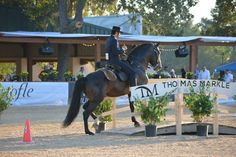 Working Equitation- the bridge