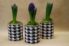 "...our ""bulbs & houndstooth""...paint cans wrapped in fabric...fun for spring!"