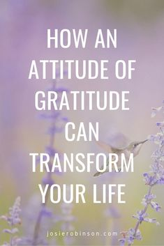 How to create an attitude of gratitude and why it will change your life. #gratitude #gratefulheart #gratitudeattitude Gratitude Jar, Practice Gratitude, Attitude Of Gratitude, Grateful Heart, Transform Your Life, Self Improvement, Simple Way, How To Become, Life Quotes